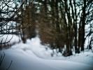 L1007918 Płatki śniegu tańczące wśród bokehu