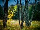 L1014353 Drzewka na polance