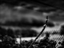 L1013215E Krajobraz z dziewanną i niewystemplowanymi drutami