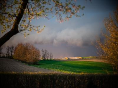 _DSC0688 Przedburzowy krajobraz z sarnami