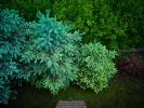 L1002284 Trochę zielonego