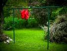 L1002391 Krajobraz z czerwonym sztafażem