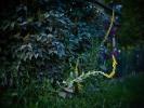 L1004062 Lilaki i ciekawskie dziewanny o zmierzchu