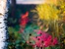 _DSC5732 Pstro... pstrawo... pstrokato... Krople kolorów... Jesień...