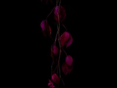 _DSC7554 Darkness