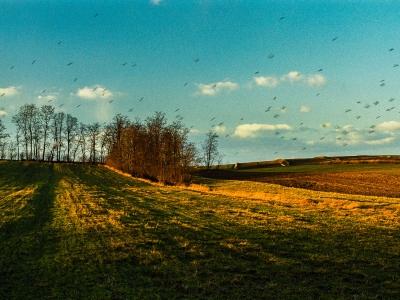 IMG014 Krajobraz z niewystemplowanymi paprochami