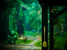 L1004651 Muchy nie lubią deszczu