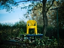 L1011797 Jesienny tron Królowej Lato