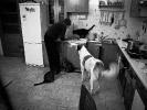 IMG017 Dzień psa i kota