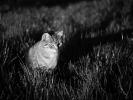 L1000845 Pani Nutka obserwuje w trawie