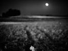 L1011506E Krajobraz z Fenką i księżycem