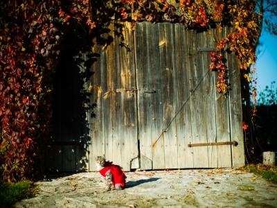 L1014196 Barwy jesieni