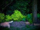 L1015389 Wieczorem w ogrodzie