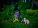 L1015392 Wieczorem w ogrodzie 2